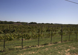Homes Near Austin Area Wineries | Austin Wineries | Realty Austin