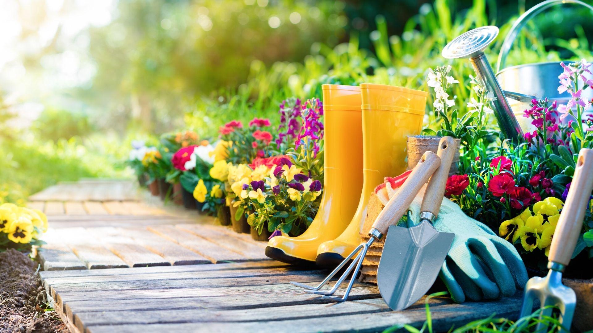 Home Garden Tips | How to Start and Maintain a Home Garden
