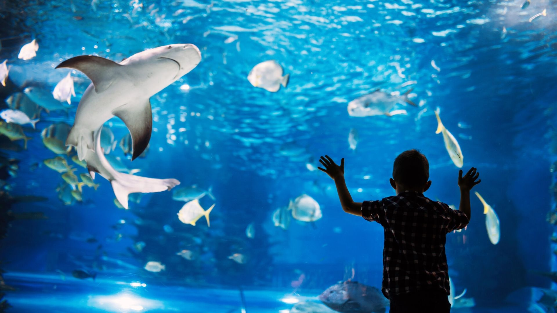 Image of Shark Story Hour