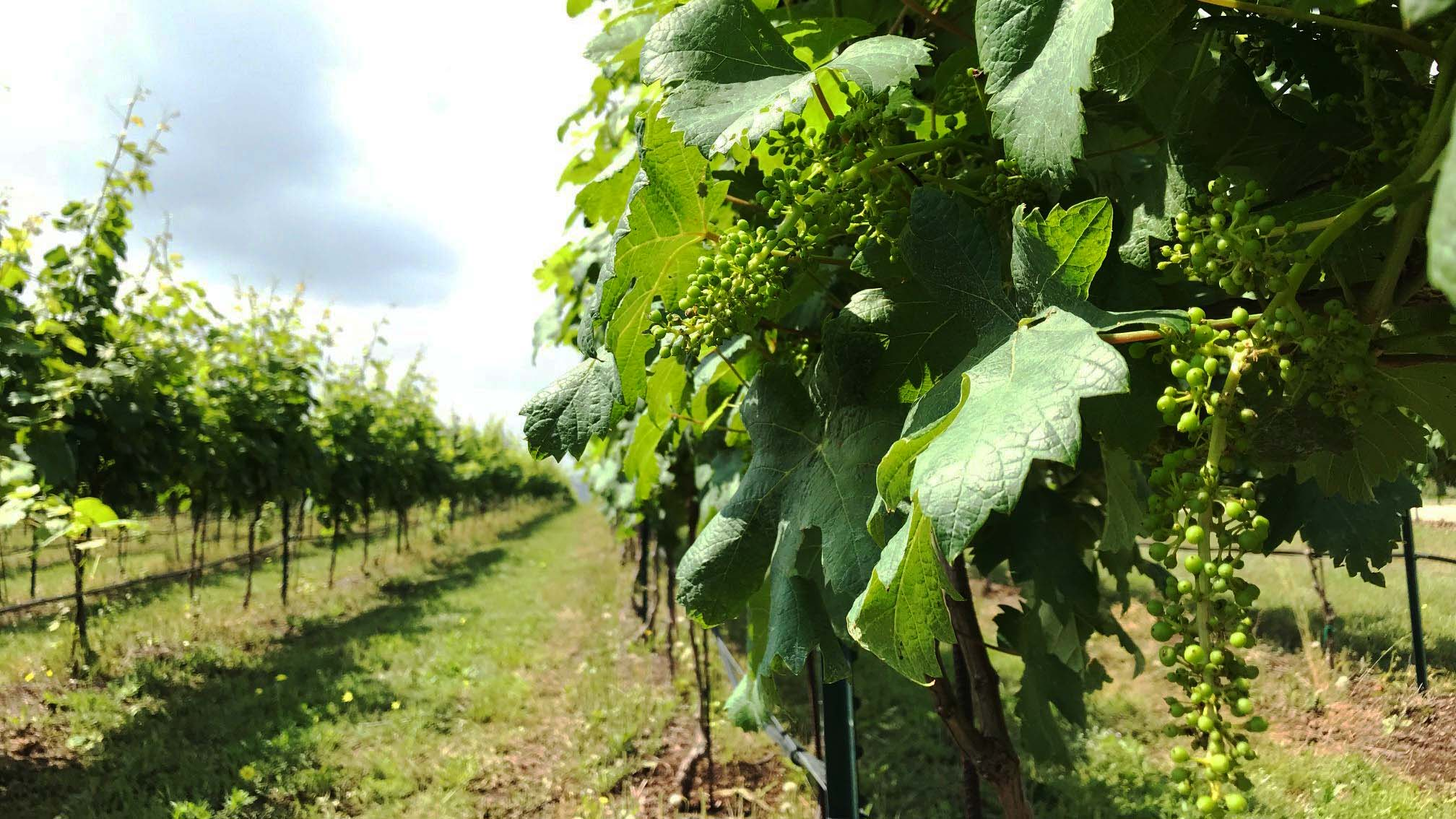 Image of Bending Branch Winery