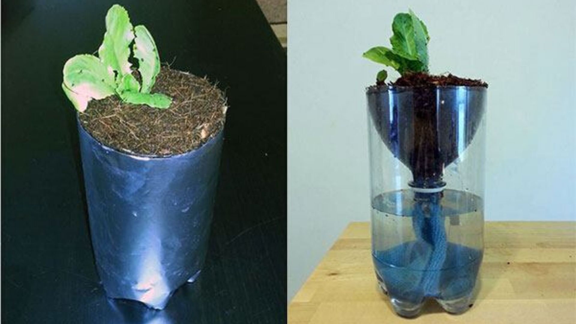 Image of Building a 2 Liter Bottle Garden