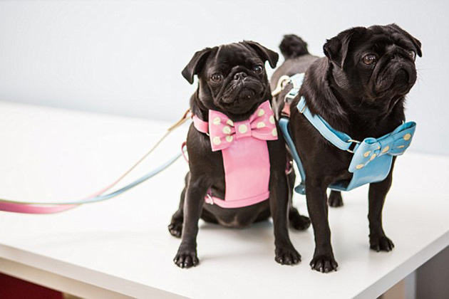 Photo of Dog's dressed in clothes