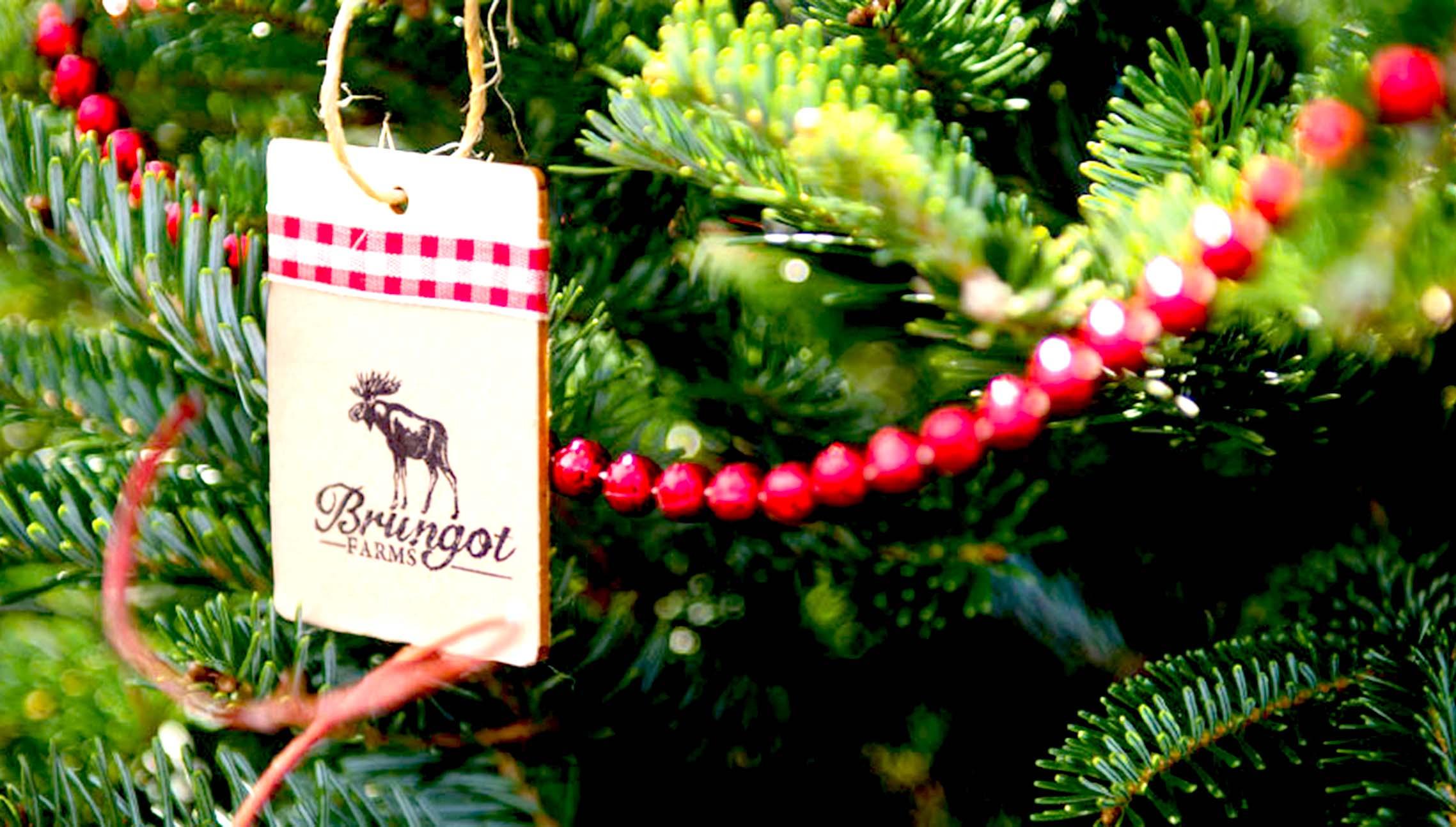 Image of Brungot Farms Christmas Trees