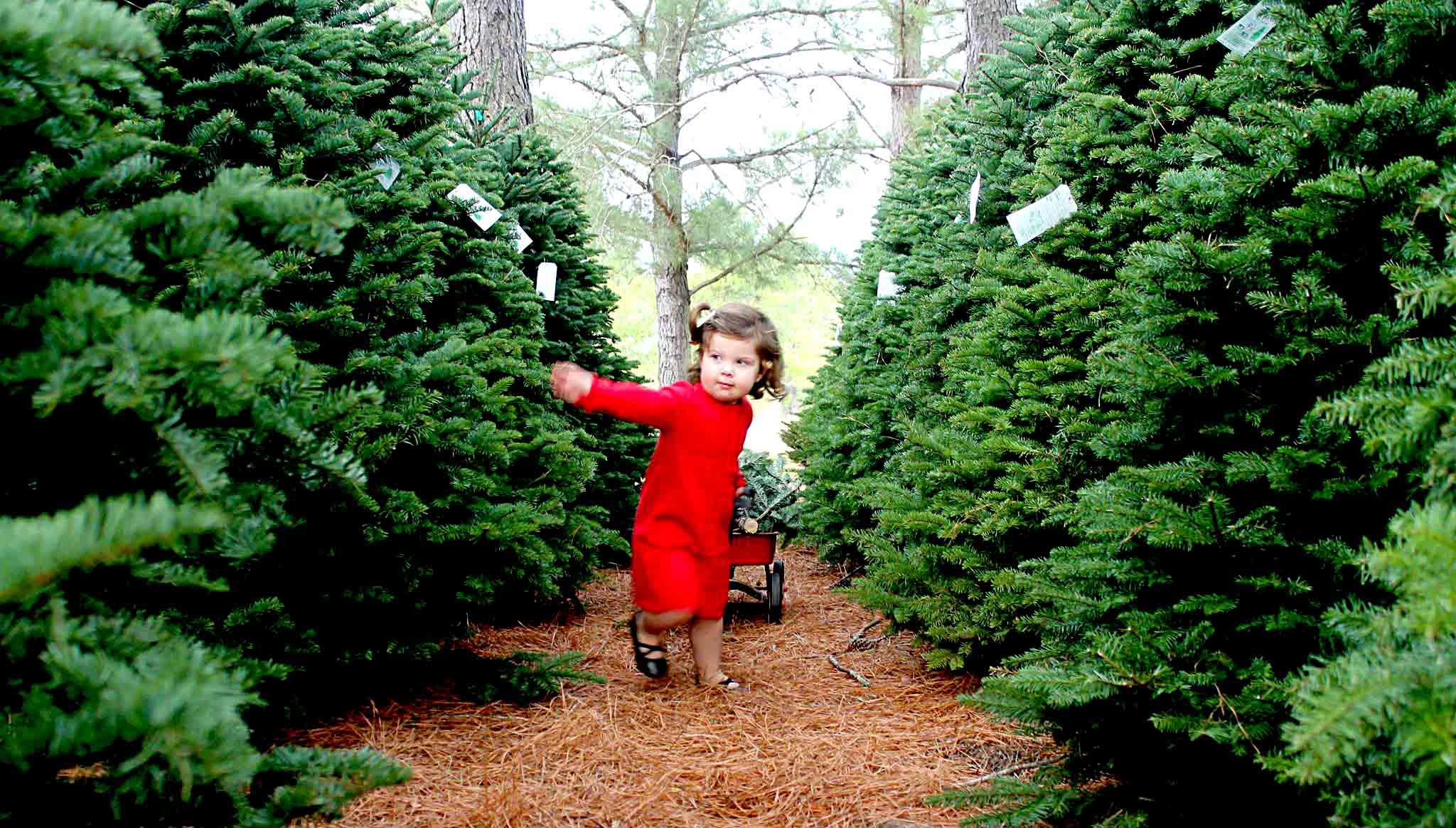Image of Evergreen Farms Christmas Trees