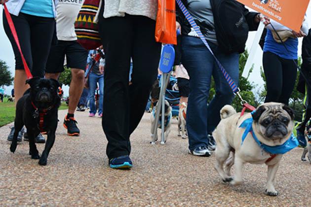 Photo of Dog Walk