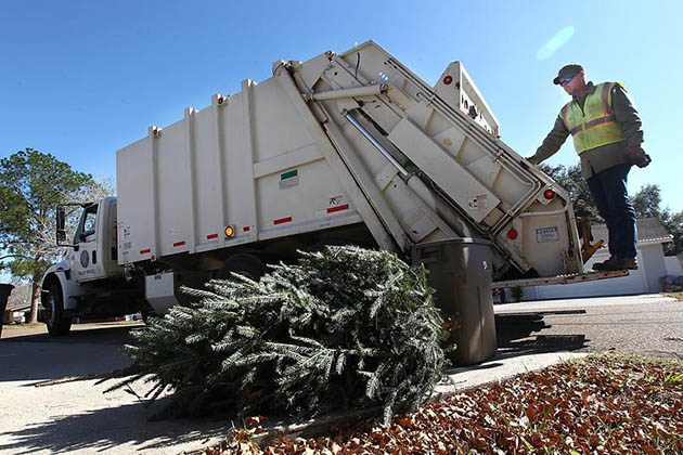 Image of City of Austin Recycling Christmas Trees in Austin, TX