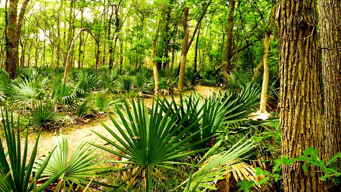 Image of Palmetto State Park