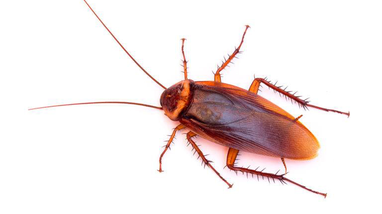 Image of Name a Cockroach After Your Ex