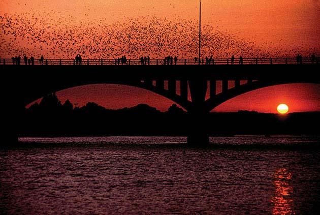 AtoX List for Newbies - Bats Under Congress Bridge - Realty Austin
